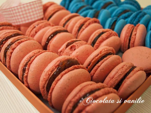 macarons colorati